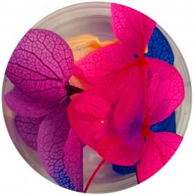 Flores Secas Colores